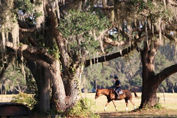 Horseback riding under oaks in Lake County Florida